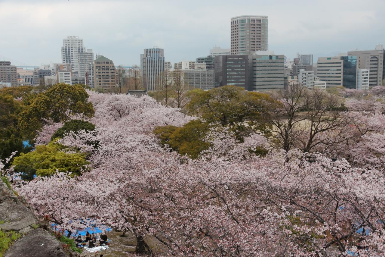 福岡城の天守台からの風景2