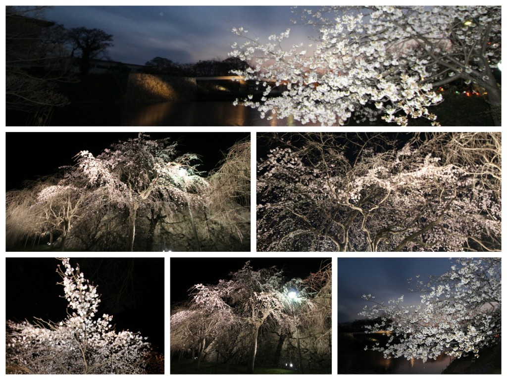 Collage_sakura2
